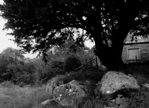 Dark Farms Glenhead